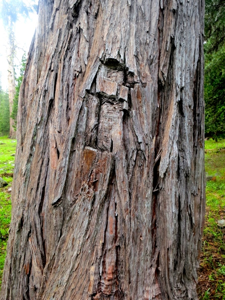 Tree blaze carved into a cedar tree in the Red Buttes Wilderness.