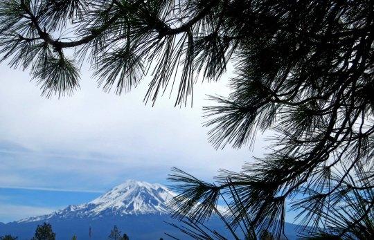 Mt. Shasta photo.
