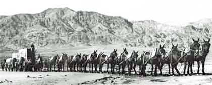 This early, unattributed photo in the public domain, provides a view of the team with its Death Valley backdrop.