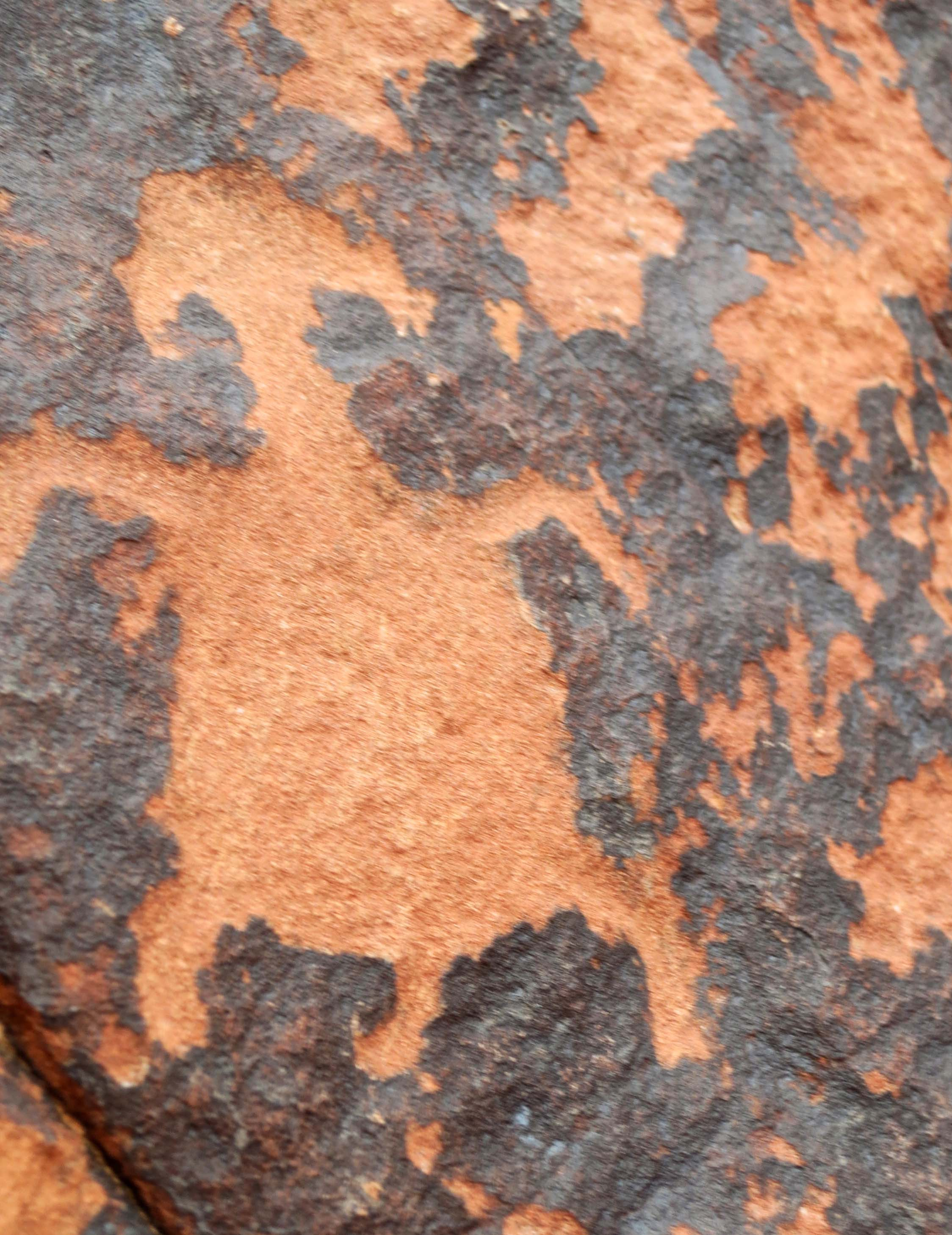 Dog petroglyph at the Valley of Fire State Park.