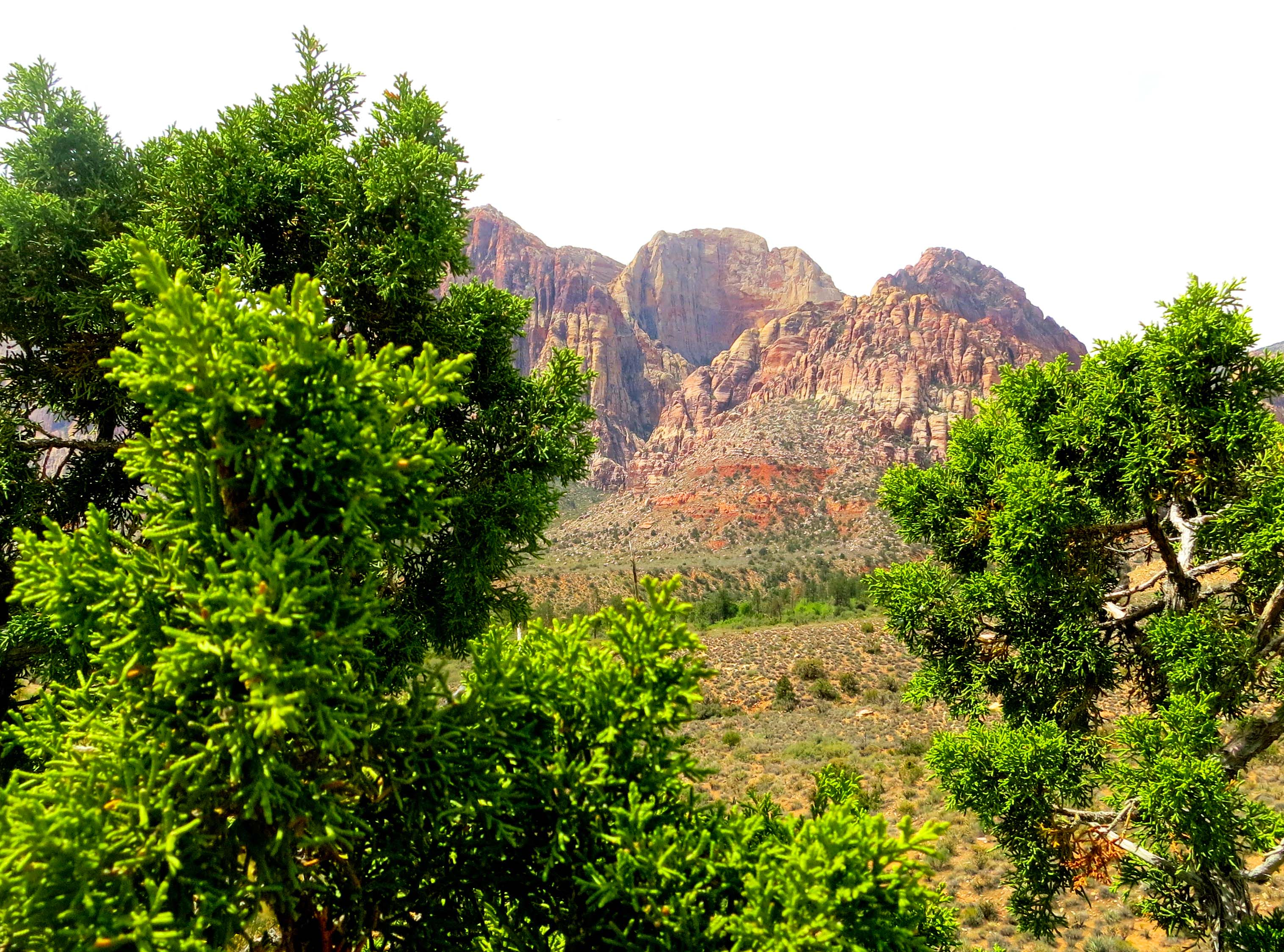 Mountains in Red Rock Canyon National Conservation Area framed by a juniper tree.