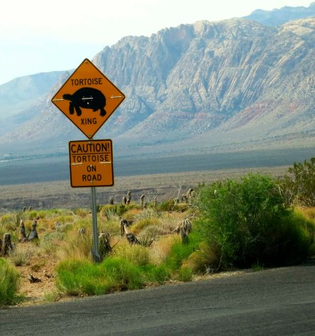 Watch out for tortoises on the road sign in Red Rock Canyon park outside of Las Vegas, Nevada.