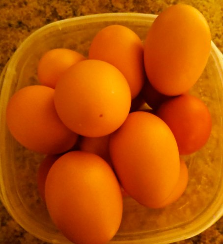 Part of our pay for taking care of the chickens. The Gang laid between three and four eggs a day.