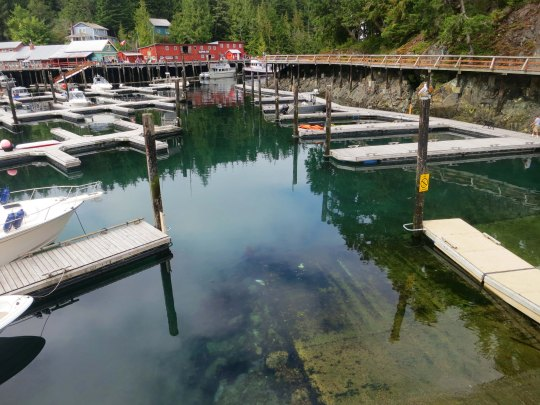 Empty docks at Telegraph Cove suggests all of the tours and fishing expeditions are already out on Johnstone Strait. Photo by Curtis Mekemson.