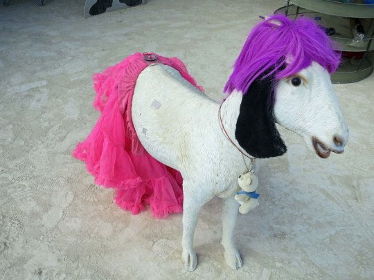 Goat at Burning Man 2014 wearing a pink tutu. Photo by Curtis Mekemson.