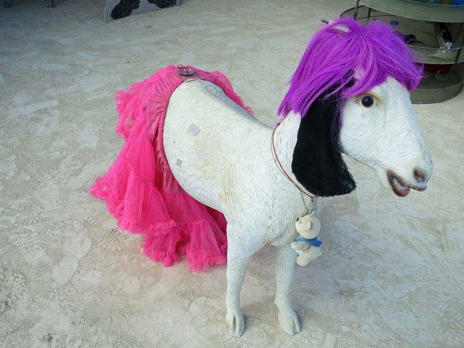 Goat at Burning Man 2014 wearing a pink tutu. Photo by Curtis Mekemson.
