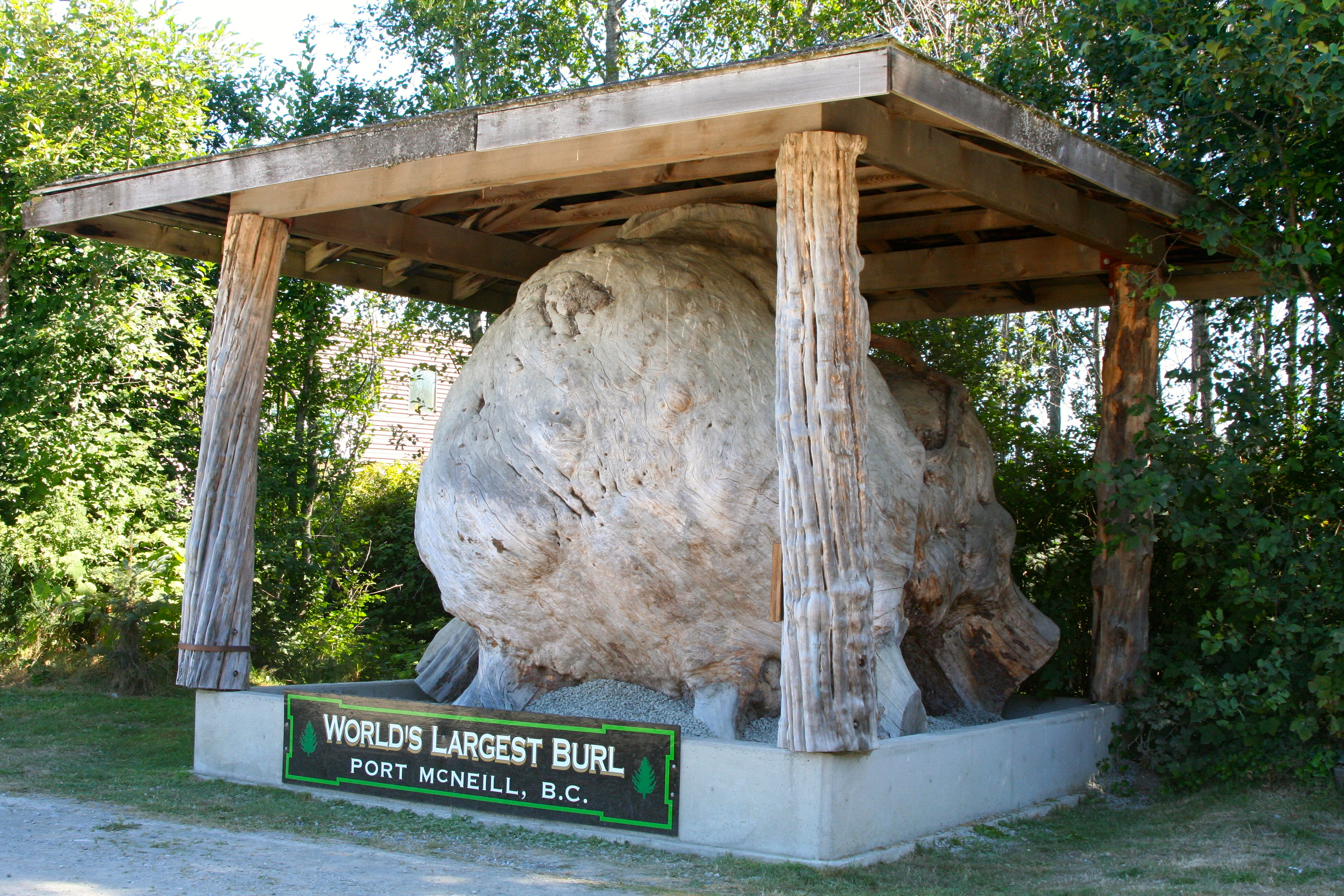 You are looking at Port McNeill's pride and joy: the worlds largest burl. Can you imagine this thing growing on a tree? (Photo by Peggy Mekemson.)