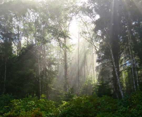 Mist in trees on Vancouver Island sea kayak trip. Photo by Curtis Mekemson.