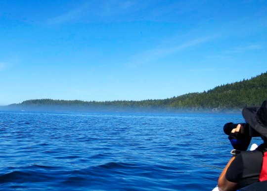 Peggy Mekemson searches for Killer Whales while kayaking across Johnstone Strait off of Vancouver Island. Photo by Curtis Mekemson.