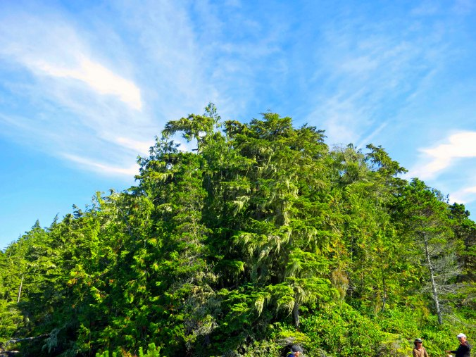 Sky and clouds meet forest on Hanson Island in the Johnstone Strait of British Columbia. Photo by Curtis Mekemson.
