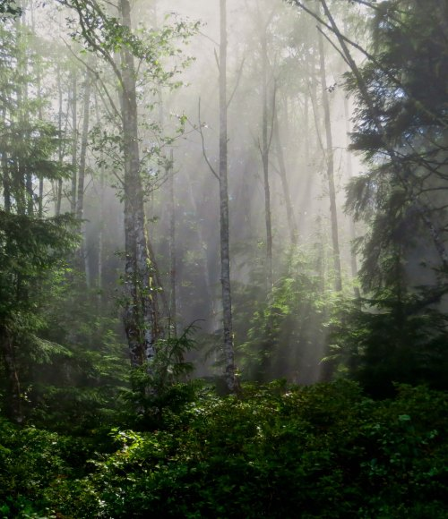 Sun illuminates forest during kayak trip on Johnstone Strait, BC. Photo by Curtis Mekemson.