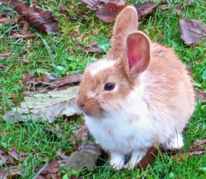 I am going for the awww factor with this baby bunny.