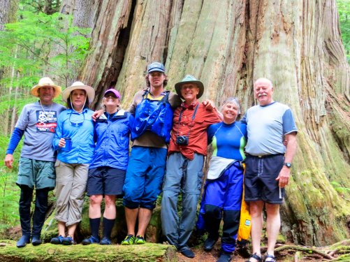 Giant cedar tree on Hanson Island near the Orca Lab in Johnstone Strait, British Columbia.