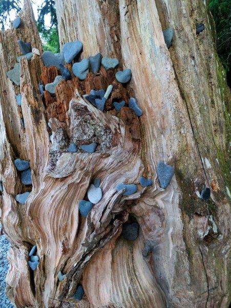Heart shaped rocks found on Little Kai Beach off of Johnstone Strait. Photo by Curtis Mekemson.