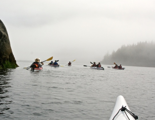 Sea Kayak Adventure group works its way around Hanson Island, British Columbia in the fog.