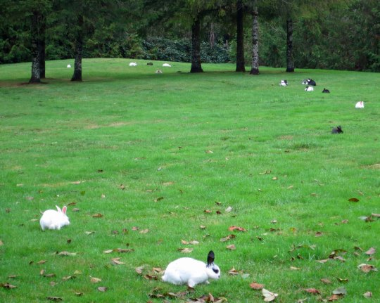 This was only a few of the rabbits, but it makes the point.