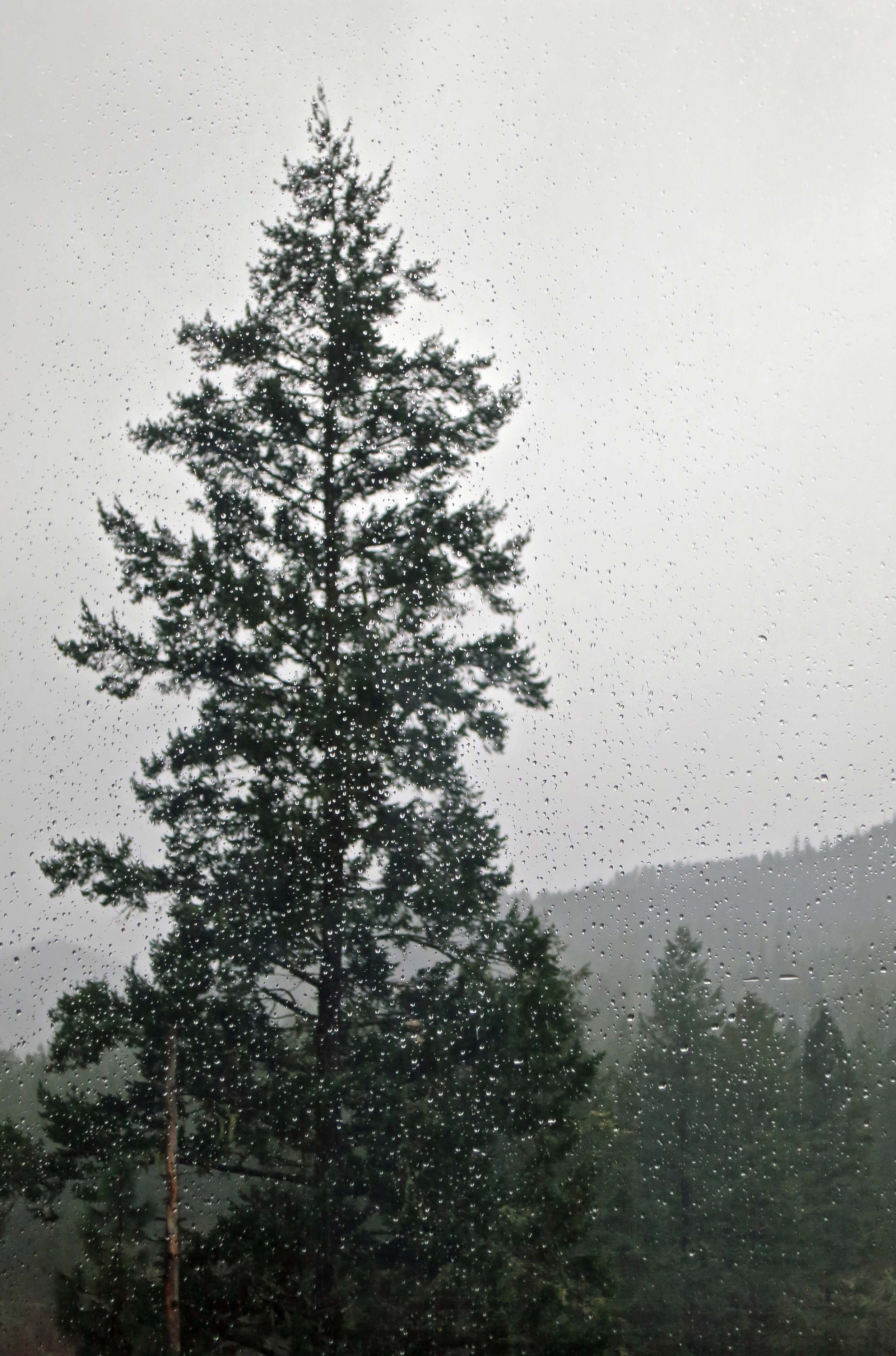 Rain splattered windows provided a view of our cedar tree out of the sunroom.