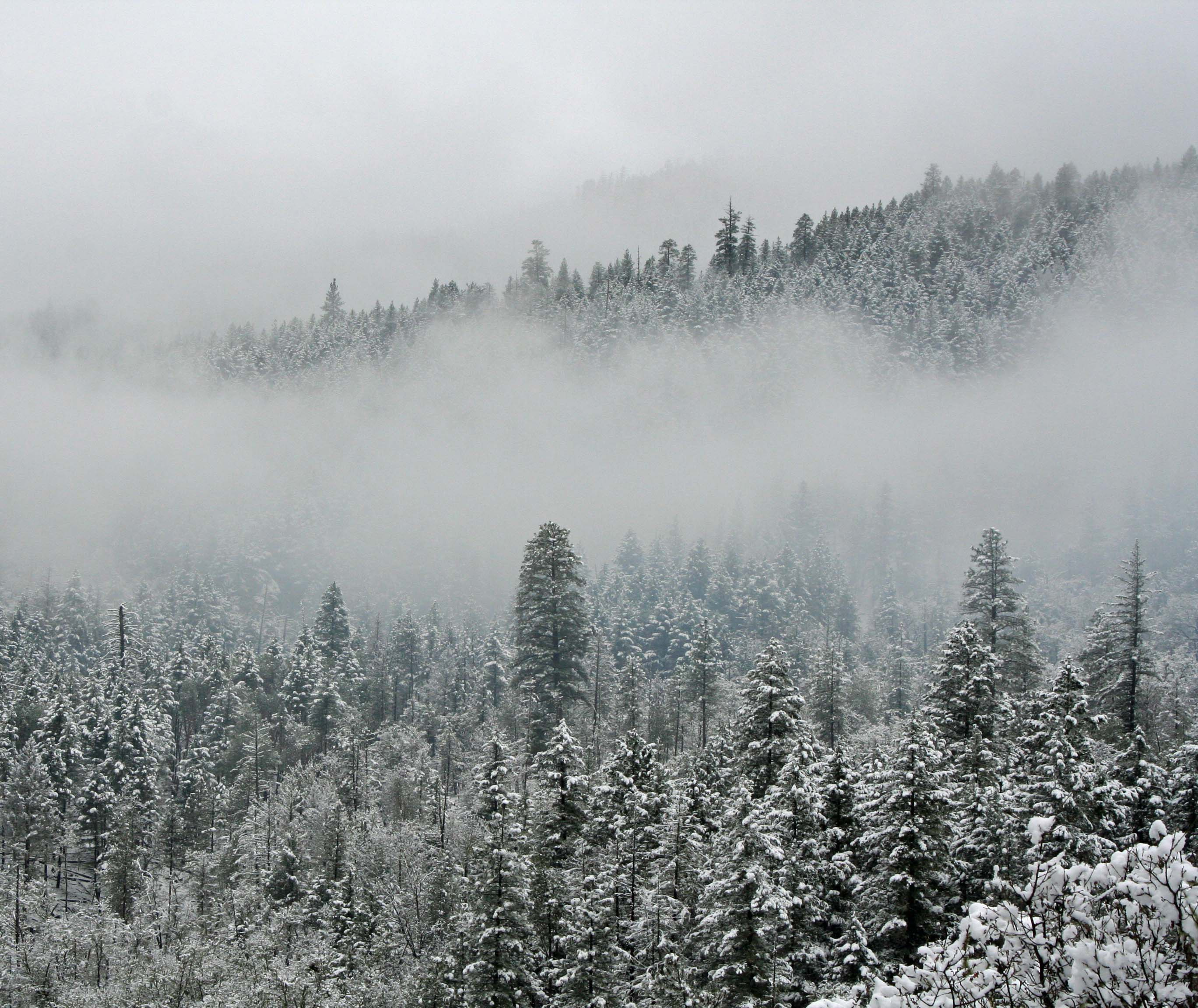 Southern Oregon forest covered with snow. Photo by Curtis Mekemson.