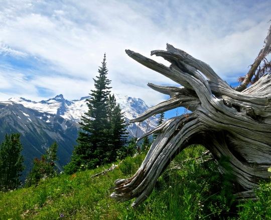 July:: Mt. Rainier National Park. Washington State.