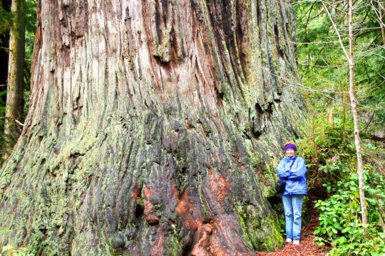 Tasha's mom, Peggy, stands next to a redwood tree.