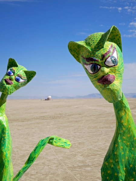 I found these cats with their unique look way out on the Playa.