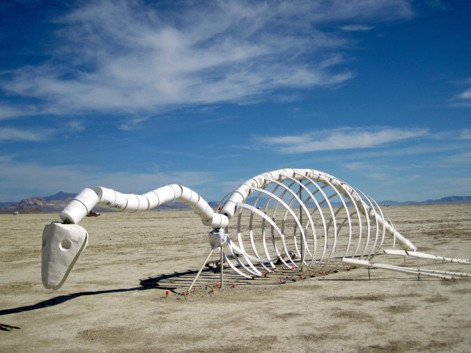 This dinosaur skeleton was also wandering the Playa.