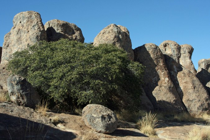 Trees and rocks create interesting photos at City of Rocks State Park in southwestern New Mexico.