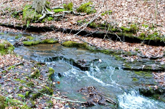 Numerous trails lead off of the Trace, often leading to babbling brooks.