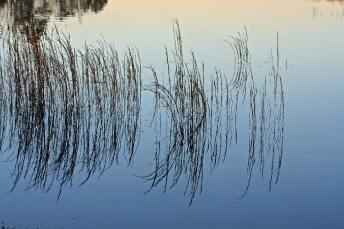 I found this grass growing in the lake the next morning and enjoyed its reflection.