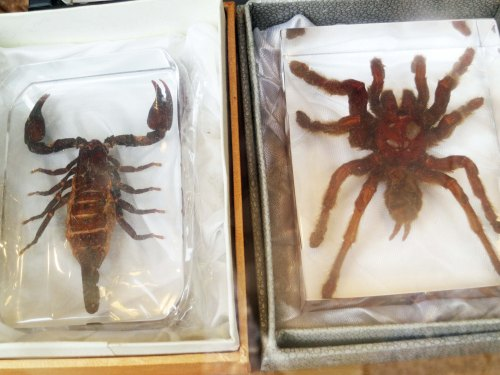 Another shop that caught my attention featured preserved scorpions and tarantulas.