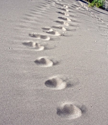 And lots of animal tracks.