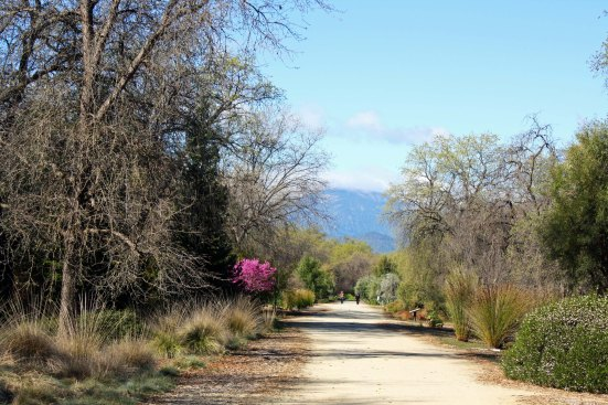 One of the reasons for the bridge is to connect the town of Redding with an extensive series of hiking and biking trails on the opposite side of the river, starting with the McConnell Arboretum.