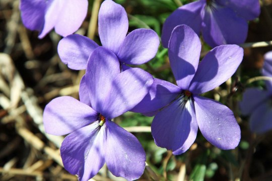 Peggy and I also found these colorful violets.