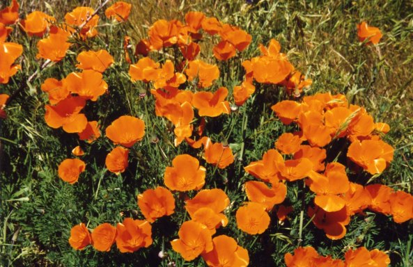 And California Poppies, plus two job offers.