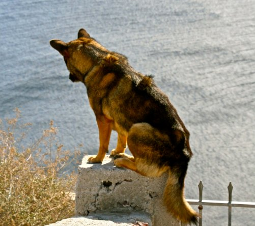 We found this dog admiring the Aegean Sea while perched on a rock. In our travels through the Mediterranean we often found cats and occasionally dogs that seemed owner free or at least wandered at will.