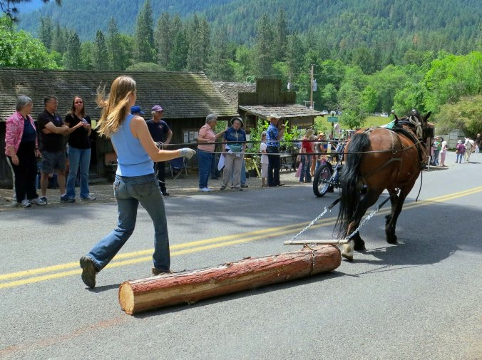 Horses used to help harvest timber.