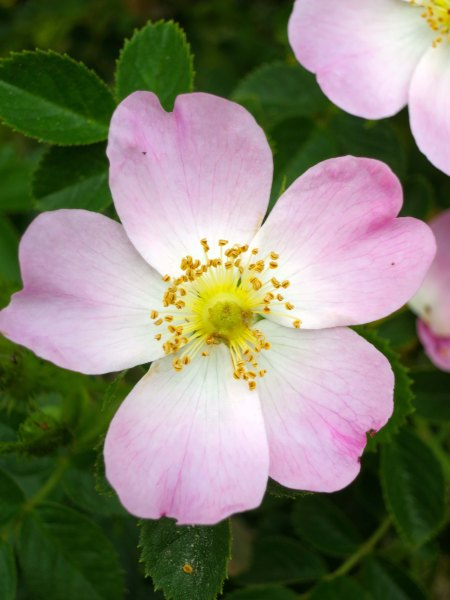 Or stop and smell the wild roses...
