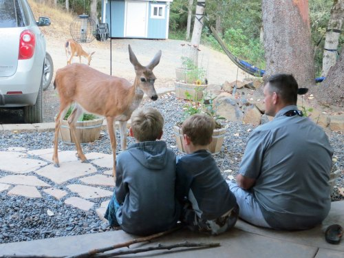 "Missy the Deer made out like a bandit as soon as the boys— and Dad, Clay— discovered that she like to eat apples. Several times each day we would hear, ""Missy is outside wanting an apple."" Of course she was. Missy recognizes a soft touch when she sees one."