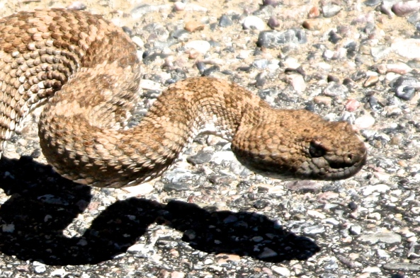 I warned the boys to watch out for rattlesnakes since our neighborhood seemed to have an infestation of them over the summer.