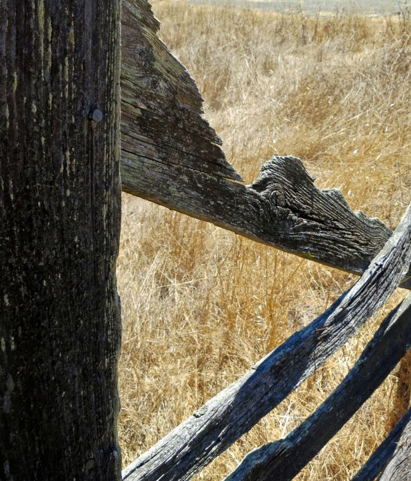 I found this ancient fence at Olompali State Park. It was likely built by the Black/Burdell Families who owned the property between 1852 and 1940.