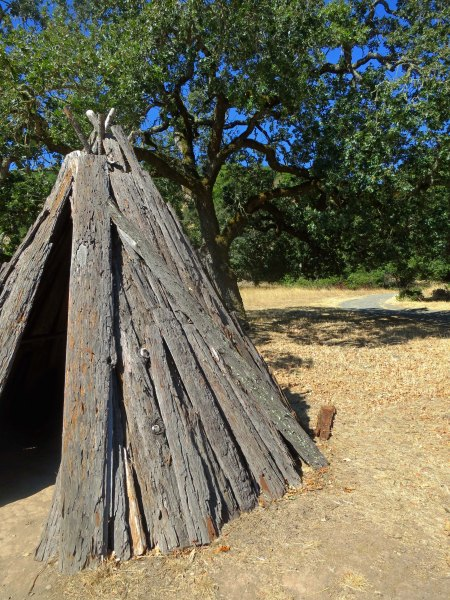 The Miwoks built some of their homes with redwood siding, or at least redwood bark. This example of a Miwok shelter is located at Olompali.
