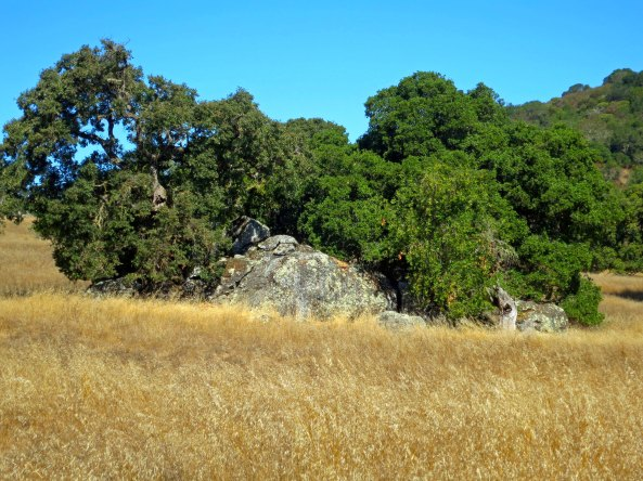 This large rock with its gorgeous backdrop above the barn caught my attention.