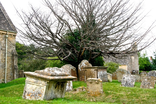This tree overlooking the Bampton graves captured my attention.