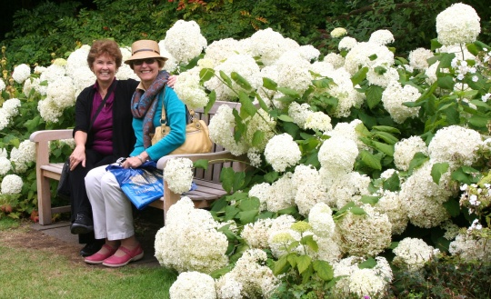 Jane and I sit among magnificent Hydrangeas at Highclere Castle (Downton Abbey). A taste of things to come.