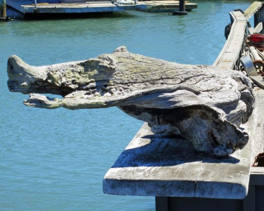 This driftwood crocodile was lurking on a ledge.
