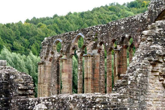 Wall ruins of Tintern Abbey in England
