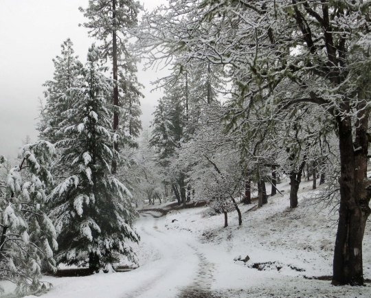 There is great beauty in the world. Snow adds another dimension. This is the road leading down to our house.