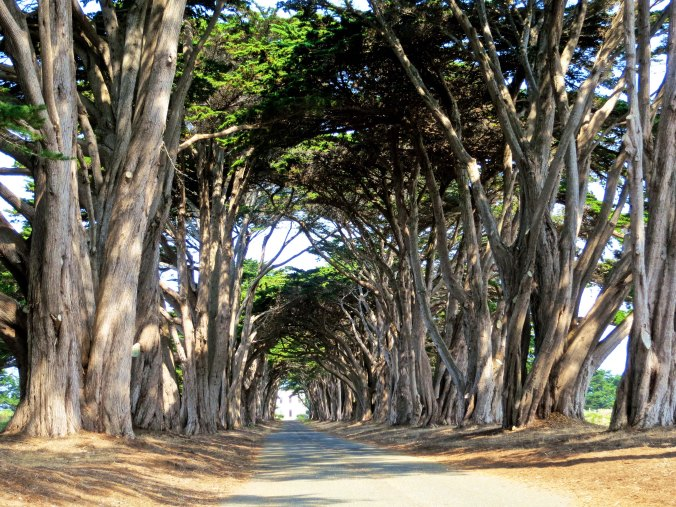 1 Tunnel of Cypress Trees at Marconi-RCA wireless site Point Reyes