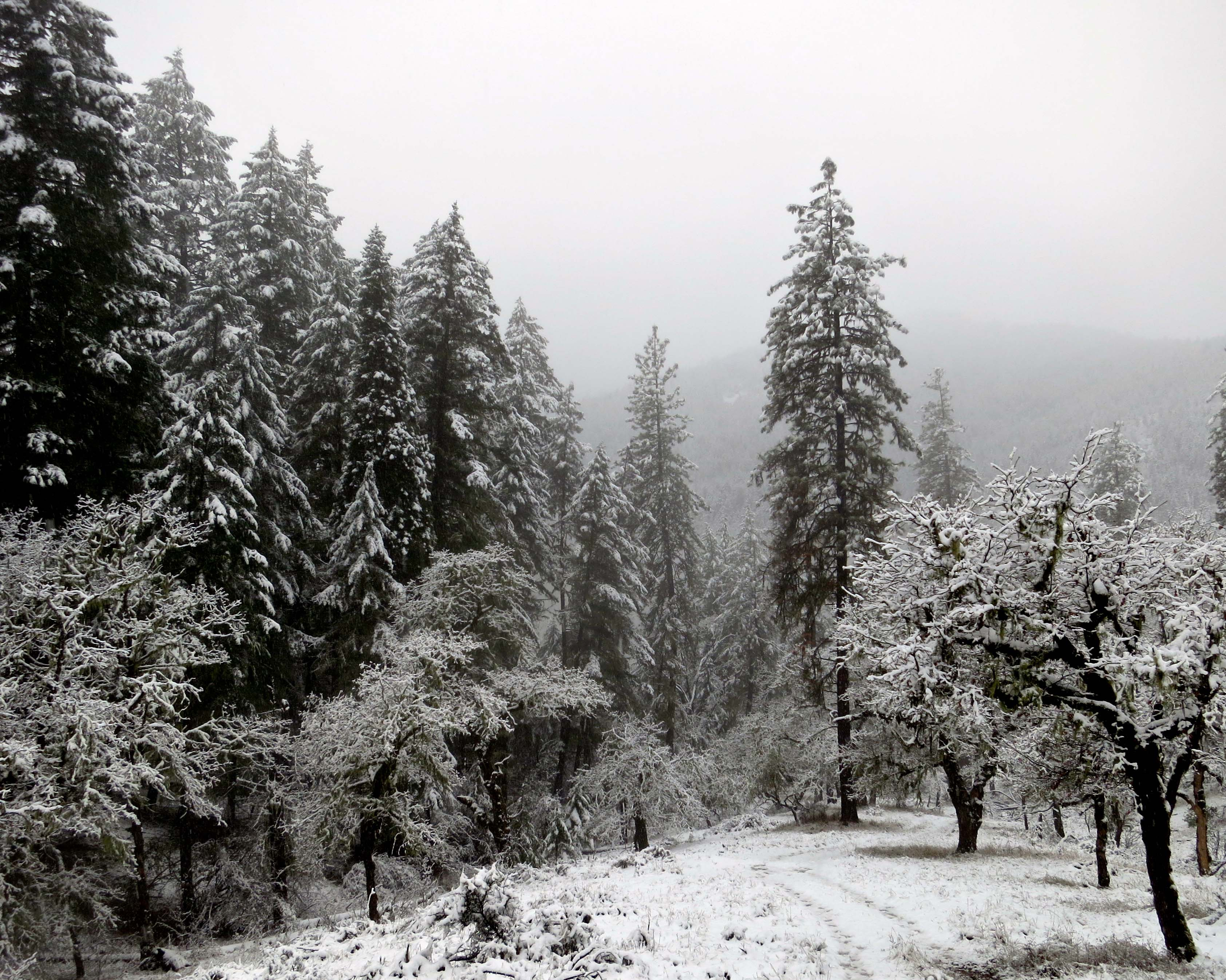 National Cage Bird Show Incorporated Klamath National Forest Snowfall Near Applegate Lake