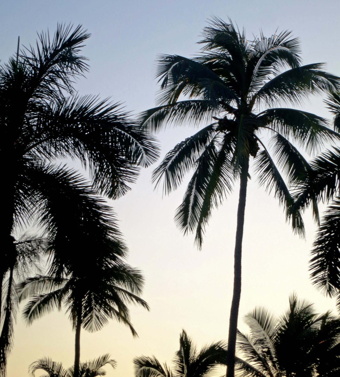 12 palms at sunset in puerto vallarta wandering through time and place